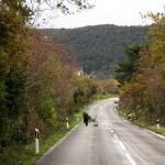 Experience Pelješac and Konavle