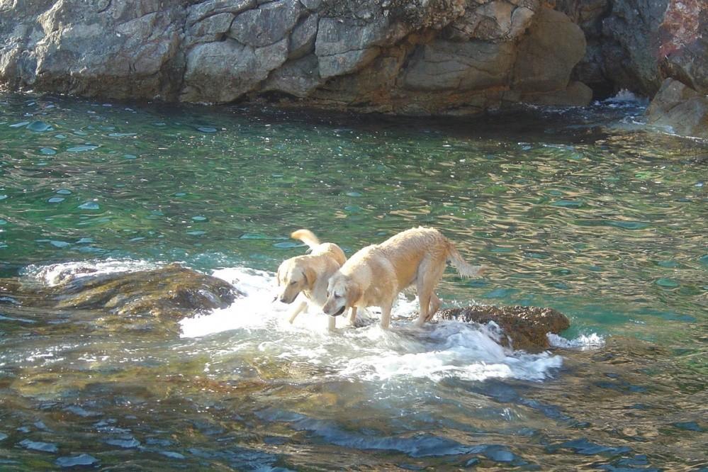 Dubrovnik Dog friendly beach