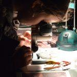 Children workshops in Aquarium