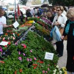 Flower Fair Dubrovnik