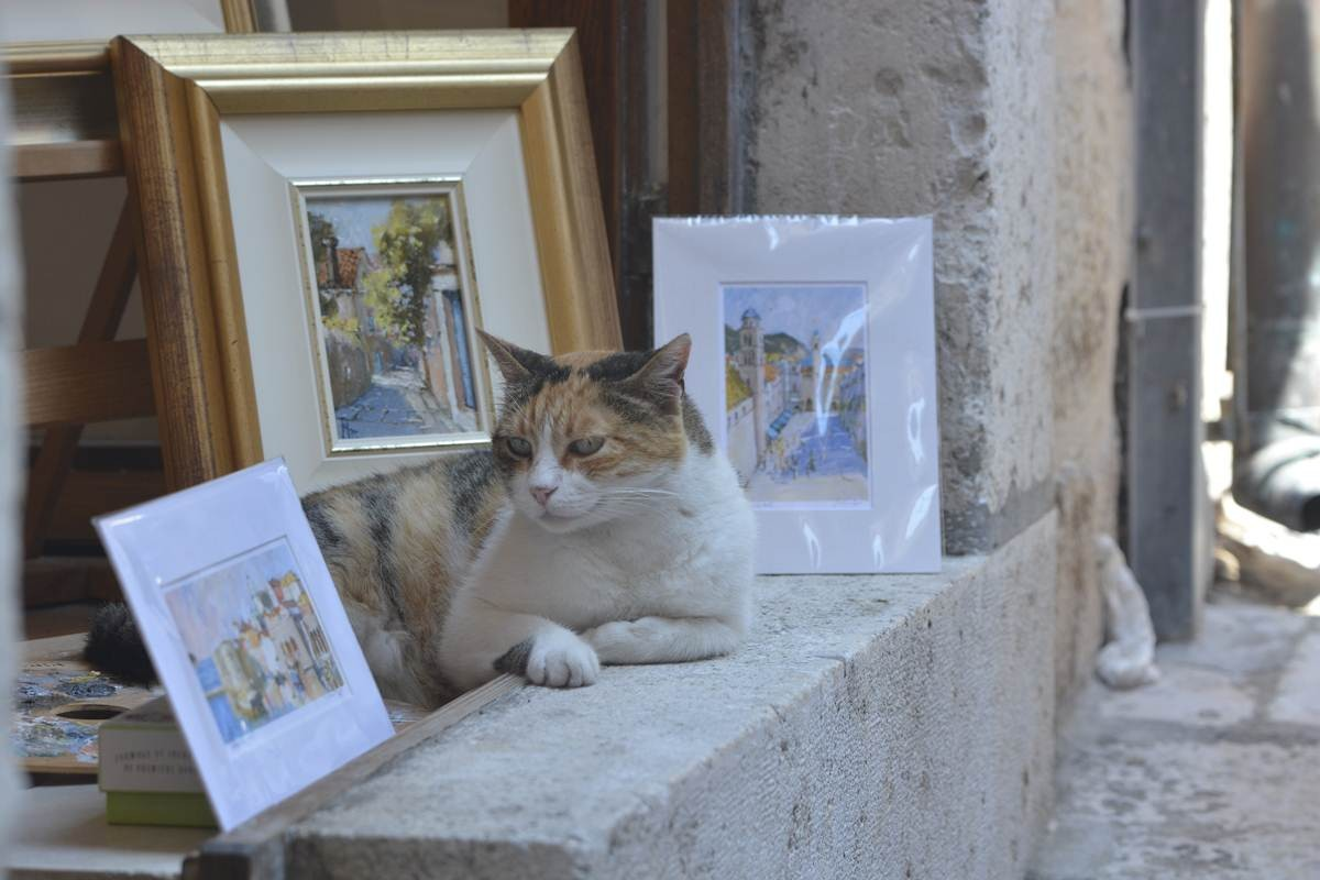 Stray Cats of Dubrovnik (4)